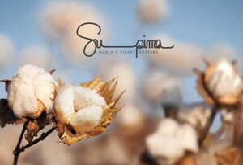 Supima Cotton: Chất liệu vải cotton xịn nhất thế giới